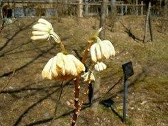 遊びの山にも春が溢れ出す ・・・_b0102572_1033545.jpg