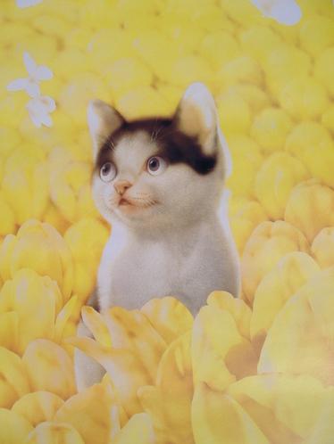 【暦】三月の犬さん・猫さん・・・!@村松 誠_c0328479_1510305.jpg
