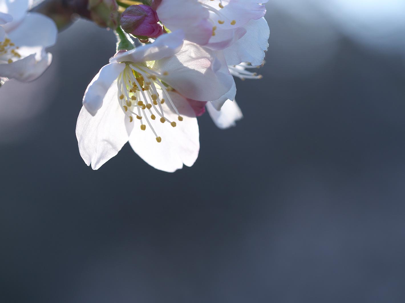 春は静かに訪れた_f0121181_1241679.jpg