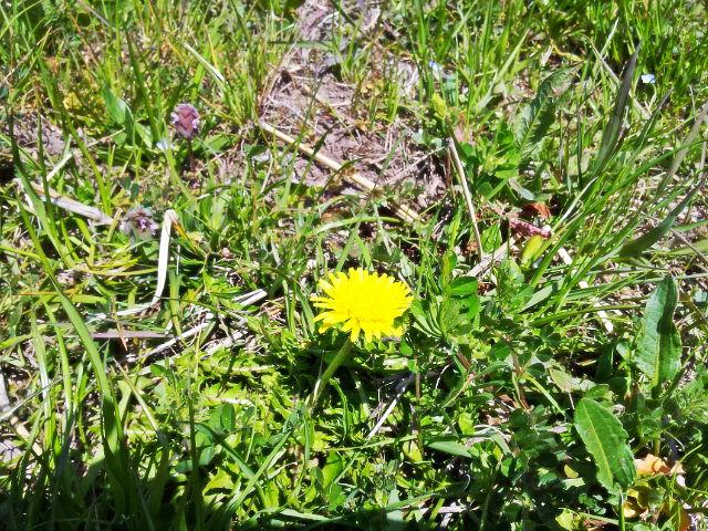 春。。。。_b0210688_1149206.jpg