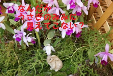 f0203094_11574663.jpg