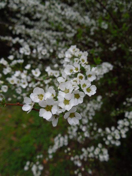 花わんさか咲いてます_c0177995_18363919.jpg