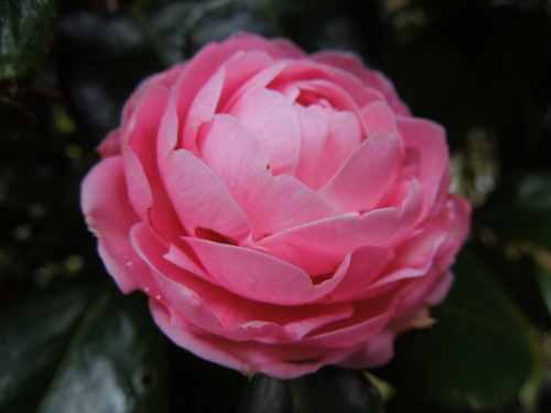 花わんさか咲いてます_c0177995_1837140.jpg