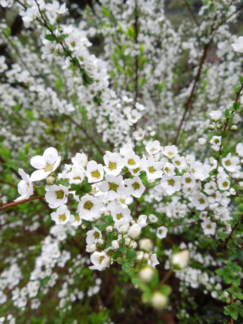 花わんさか咲いてます_c0177995_18372135.jpg