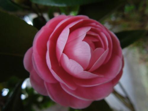 花わんさか咲いてます_c0177995_18374169.jpg