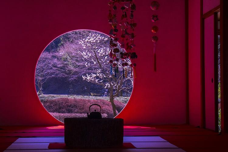 北鎌倉 明月院 満開の梅とつるし飾り_b0145398_0432481.jpg