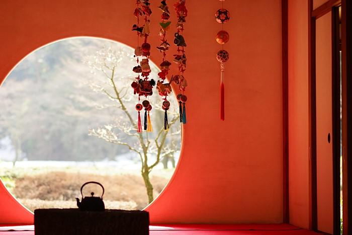 北鎌倉 明月院 満開の梅とつるし飾り_b0145398_0452582.jpg