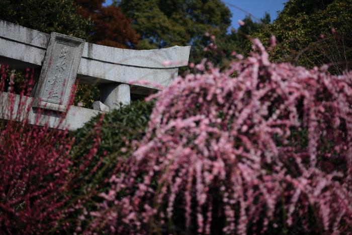 水前寺成趣園で梅を愉しむ_e0135098_21351872.jpg