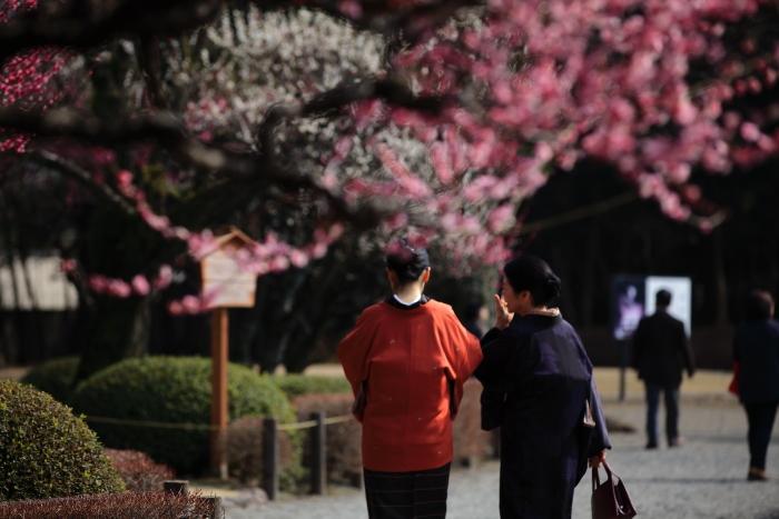 水前寺成趣園で梅を愉しむ_e0135098_21354788.jpg