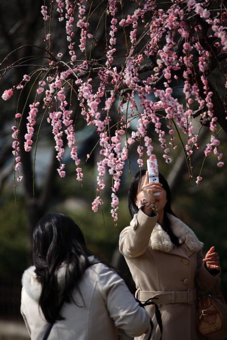 水前寺成趣園で梅を愉しむ_e0135098_21355932.jpg