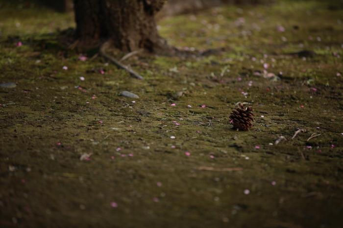 水前寺成趣園で梅を愉しむ_e0135098_21362115.jpg