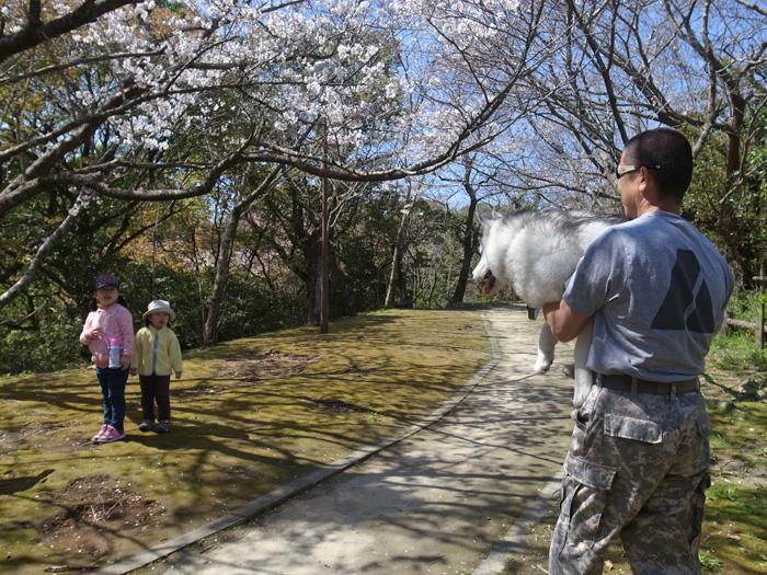 静かなる桜まつり♪_c0049299_459682.jpg