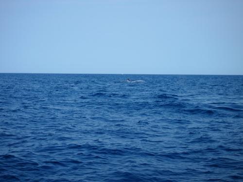 クジラと出会った日_a0037910_04231031.jpg