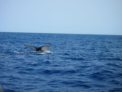 クジラと出会った日_a0037910_04231100.jpg