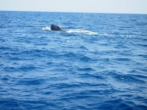 クジラと出会った日_a0037910_04231104.jpg