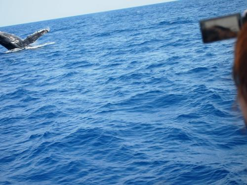 クジラと出会った日_a0037910_04231107.jpg