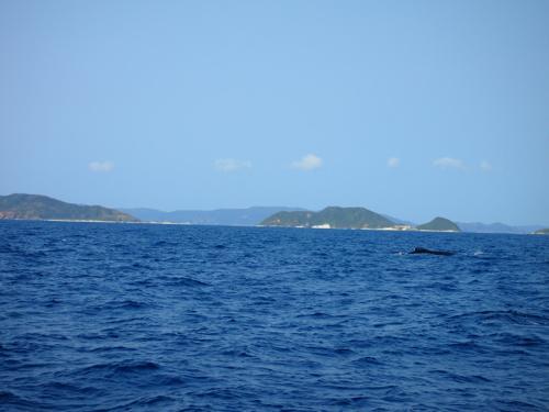 クジラと出会った日_a0037910_04231177.jpg