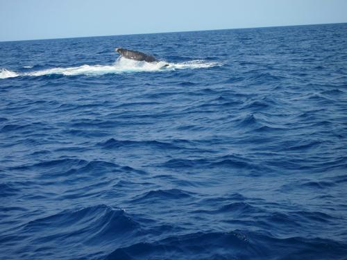 クジラと出会った日_a0037910_04231195.jpg