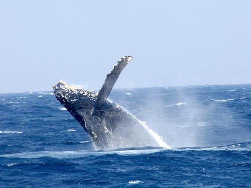 クジラと出会った日_a0037910_05021700.jpg
