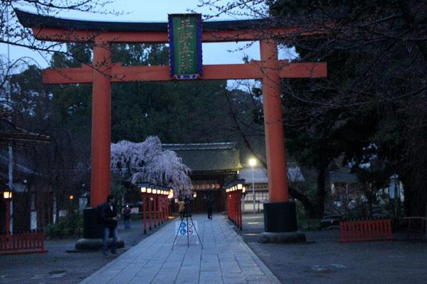 14桜始まる2  平野神社_e0048413_212329.jpg