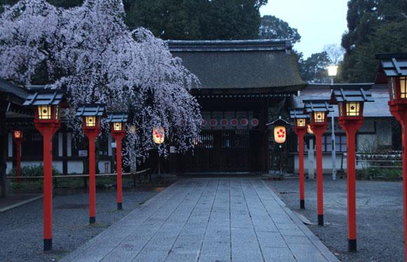 14桜始まる2  平野神社_e0048413_2124270.jpg