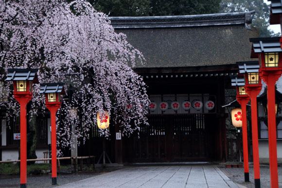 14桜始まる2  平野神社_e0048413_2125580.jpg