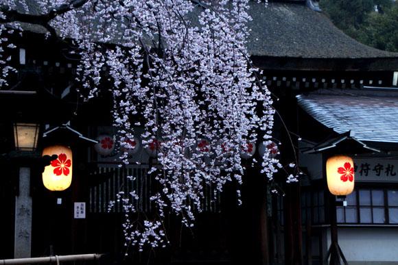14桜始まる2  平野神社_e0048413_2132016.jpg