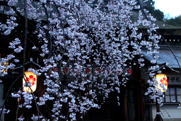 14桜始まる2  平野神社_e0048413_2133766.jpg