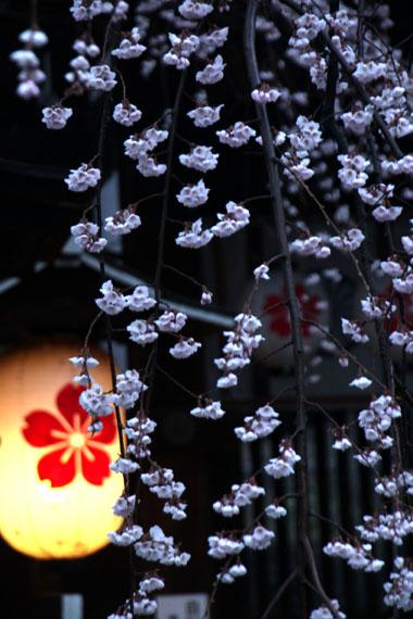 14桜始まる2  平野神社_e0048413_2135967.jpg