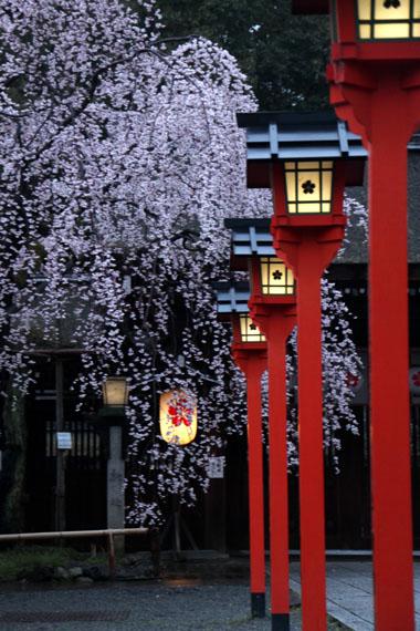 14桜始まる2  平野神社_e0048413_213994.jpg
