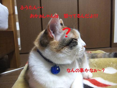 f0032418_2040742.jpg