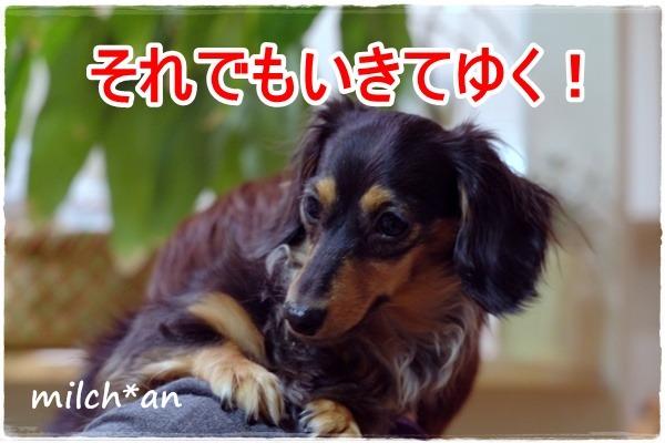 b0115642_22472049.jpg