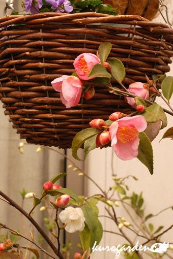 春の花_e0119151_16405982.jpg