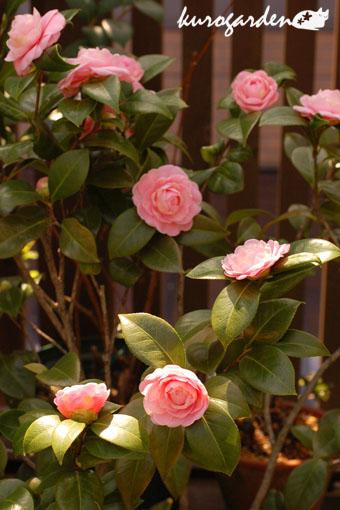 春の花_e0119151_1641229.jpg