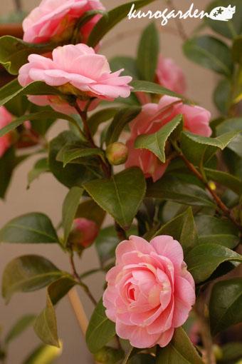 春の花_e0119151_1641555.jpg