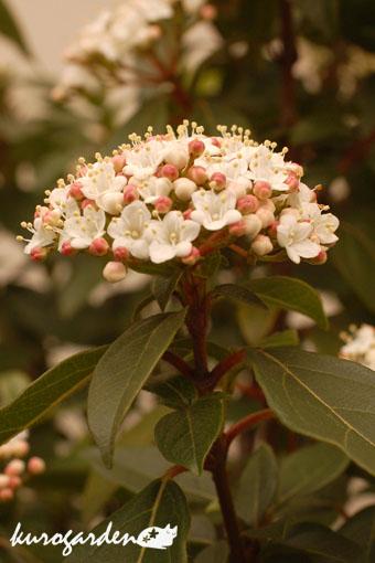 春の花_e0119151_1641969.jpg
