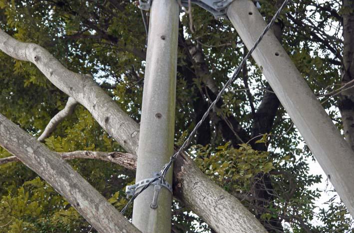 高野2号緑地の樹木と電柱・電線の危険な関係解消3・25_c0014967_16234025.jpg