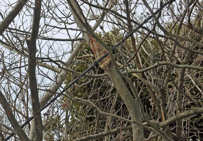 高野2号緑地の樹木と電柱・電線の危険な関係解消3・25_c0014967_16254077.jpg