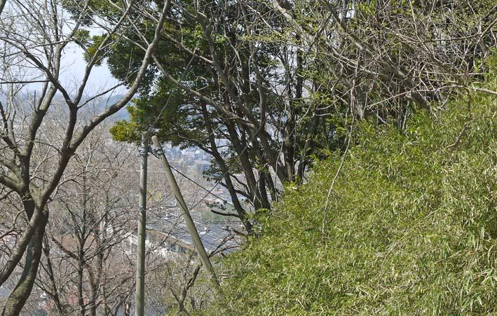 高野2号緑地の樹木と電柱・電線の危険な関係解消3・25_c0014967_16266100.jpg