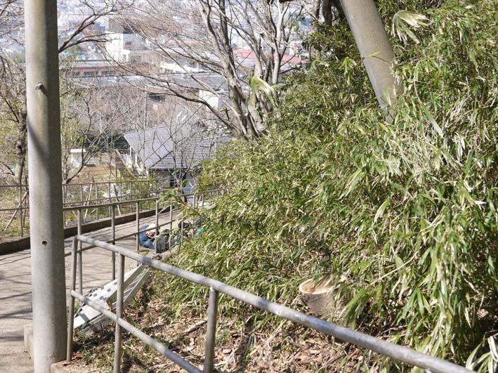 高野2号緑地の樹木と電柱・電線の危険な関係解消3・25_c0014967_16275063.jpg