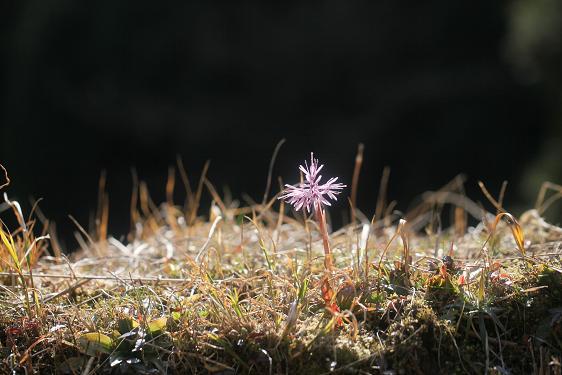 春を感じる花_e0304170_2113539.jpg