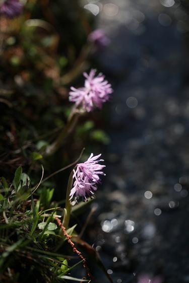 春を感じる花_e0304170_21143339.jpg