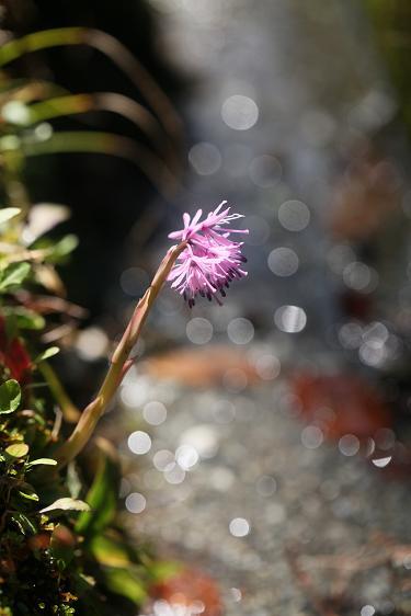 春を感じる花_e0304170_21144931.jpg