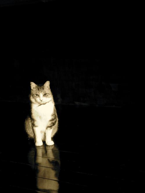 猫日和 6:Memento Mori_a0180681_2340486.jpg