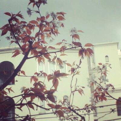 山桜_e0330790_1394623.jpg