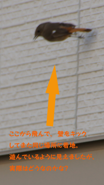 c0139591_14392829.jpg