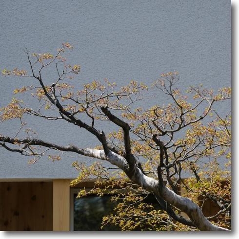 桜始開、さくらさく_f0099102_21255926.jpg