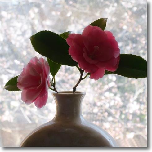 桜始開、さくらさく_f0099102_2126416.jpg