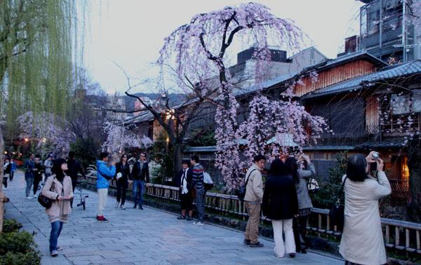 14桜始まる3 祇園白川_e0048413_21441763.jpg