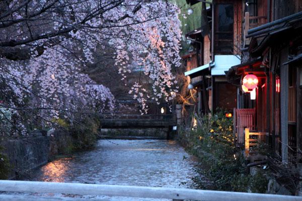 14桜始まる3 祇園白川_e0048413_21445920.jpg